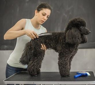 MBA en Dirección de Centros de Peluquería Canina y Felina