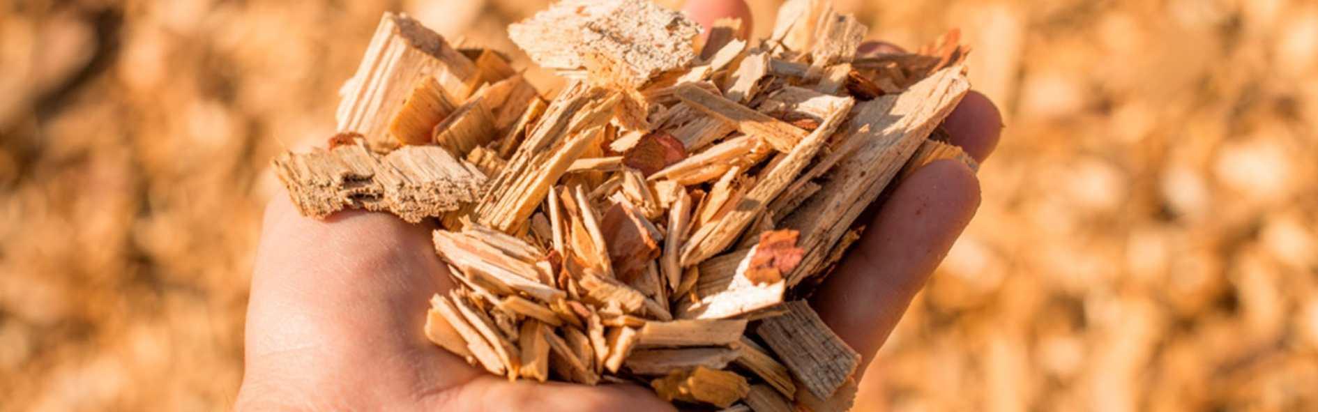 Conoce la biomasa y sus ventajas para su uso y el medio ambiente